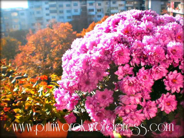 bunga ungu nisa tsvetkova